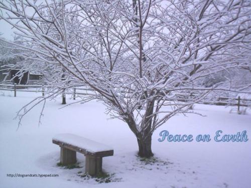 Peace on earth2