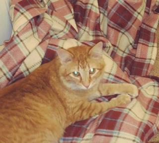 Peeta in new home
