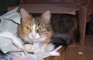 Milli in a box