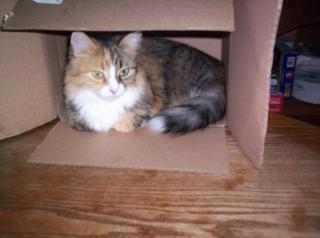 Amelia in the box again