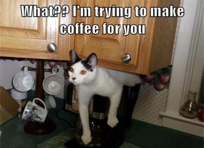 Coffee - cat making coffee