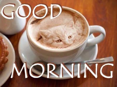 Coffee - cat