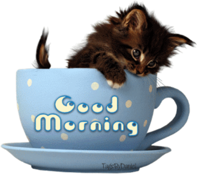 Coffee - kitten
