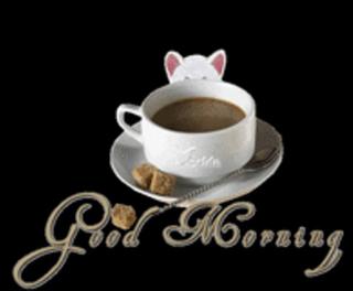 Coffee - morning kitty