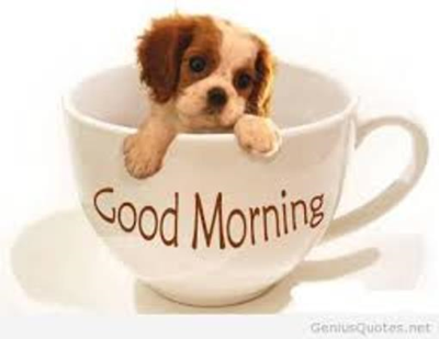 Coffee puppy