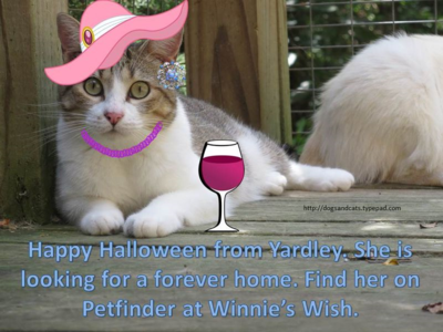 Halloween adoption - yardley