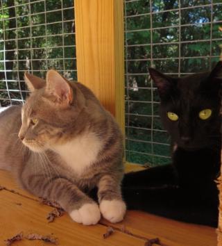 Smokey and cato