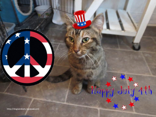 Happy 4th of July - sunspot