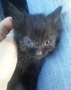 Tiny kitten1