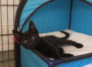 First kitten