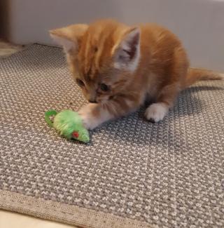 Kittenh