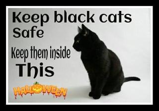 Keep black cats safe