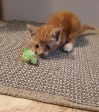 Kitteng