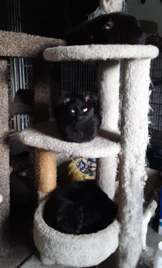 Black cats three