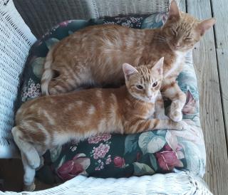 Cats orange
