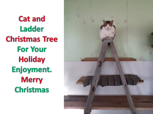 Cat and ladder christmas tree