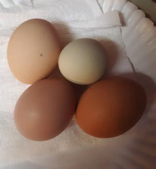 Chickensc