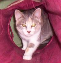 http://dogsandcats.typepad.com/blog/2013/06/sallie.html