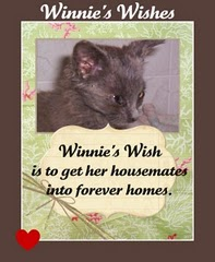 Fundraiser for Winnie's Wishes
